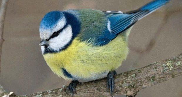 К чему снятся птицы - толкование сна