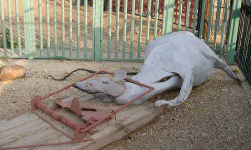 К чему снятся мертвые крысы — толкование сна по сонникам