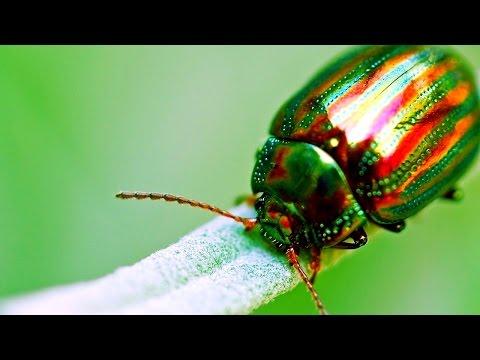 Сонник давить личинки насекомых на полу. к чему снится давить личинки насекомых на полу видеть во сне - сонник дома солнца