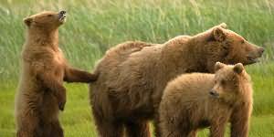Приснился белый медведь: толкование по сонникам