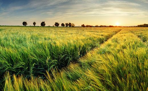 Косить траву в поле