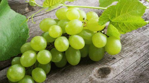 Сонник сбор винограда. к чему снится сбор винограда видеть во сне - сонник дома солнца