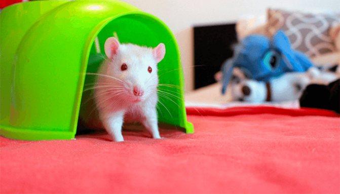 Сонник мышь коричневая. к чему снится мышь коричневая видеть во сне - сонник дома солнца