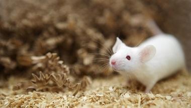 Семейство мышей