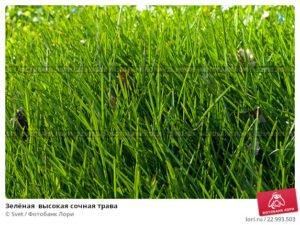 Сонник косить зеленую траву косой. к чему снится косить зеленую траву косой видеть во сне - сонник дома солнца