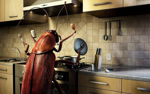 Давить личинки жуков