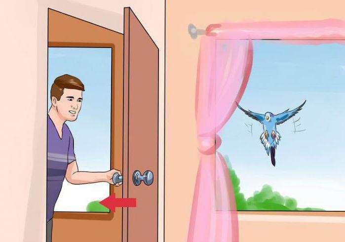 Сонник птица залетевшая в комнату. к чему снится птица залетевшая в комнату видеть во сне - сонник дома солнца