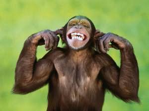 К чему снится обезьяна женщине? толкование сонников