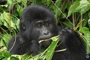 Сонник обезьяна, к чему снится обезьяна, во сне обезьяна