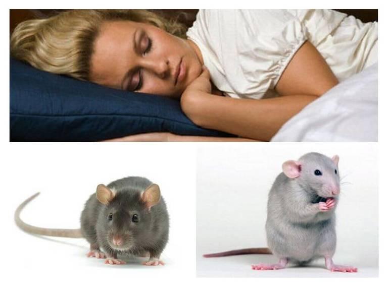 К чему снятся крысы женщине и мужчине – толкование сонника про большую, белую, дохлую крысу