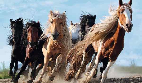 Сонник большая лошадь. к чему снится большая лошадь видеть во сне - сонник дома солнца