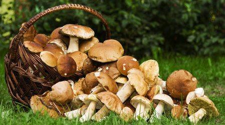 Видеть во сне грибы: толкование по сонникам