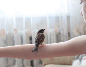 Сонник поймать птицу залетевшую в дом. к чему снится поймать птицу залетевшую в дом видеть во сне - сонник дома солнца