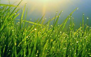 Сонник косить траву газонокосилкой. к чему снится косить траву газонокосилкой видеть во сне - сонник дома солнца