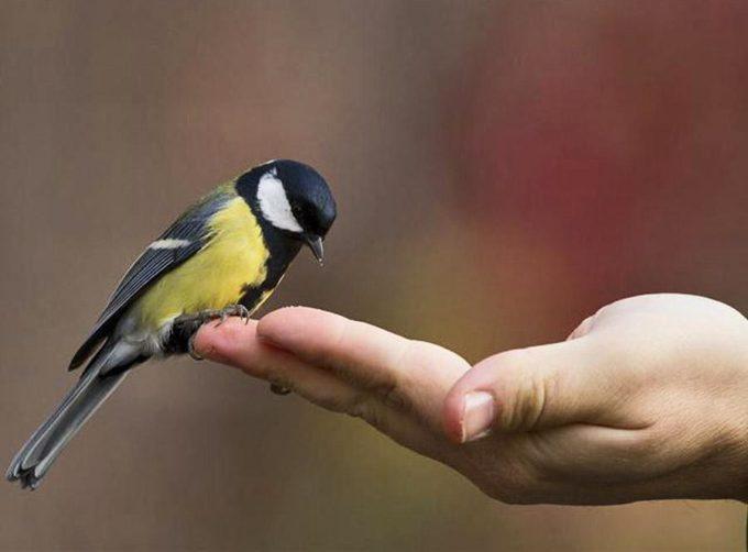 Поймать птицу залетевшую в дом