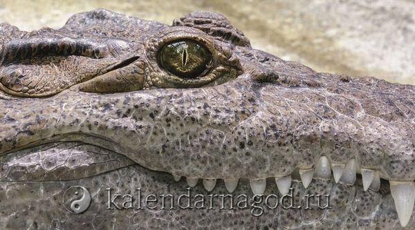 Снятся крокодилы