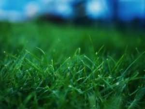 Косить зеленую высокую траву