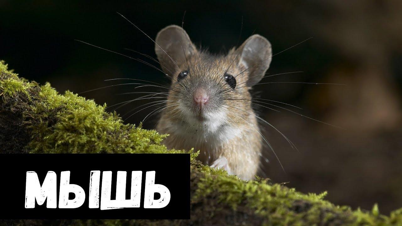 Наступить на мышь