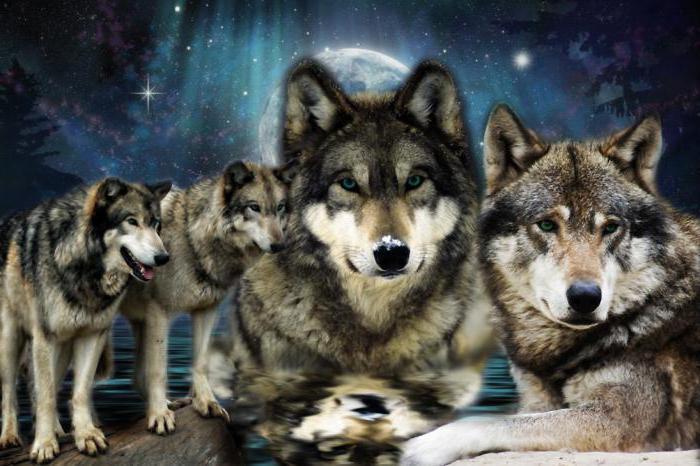 К чему снится  волк во сне — по 90 сонникам! если видишь во сне волк что значит?