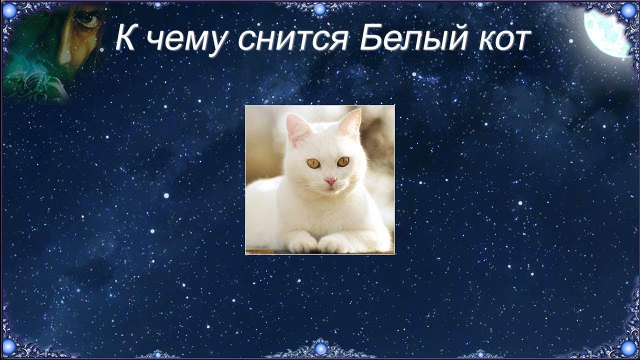 Сонник к чему сниться жирный кот. к чему снится к чему сниться жирный кот видеть во сне - сонник дома солнца