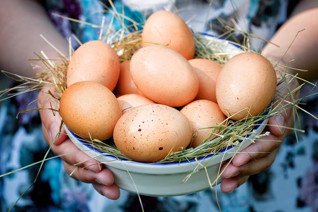 Сонник курица гнездо яйца. к чему снится курица гнездо яйца видеть во сне - сонник дома солнца