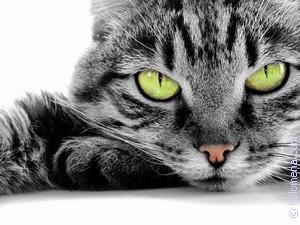 Сонник большая кошка. к чему снится большая кошка видеть во сне - сонник дома солнца
