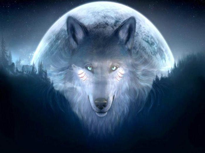 Сонник волки, к чему снятся волки во сне
