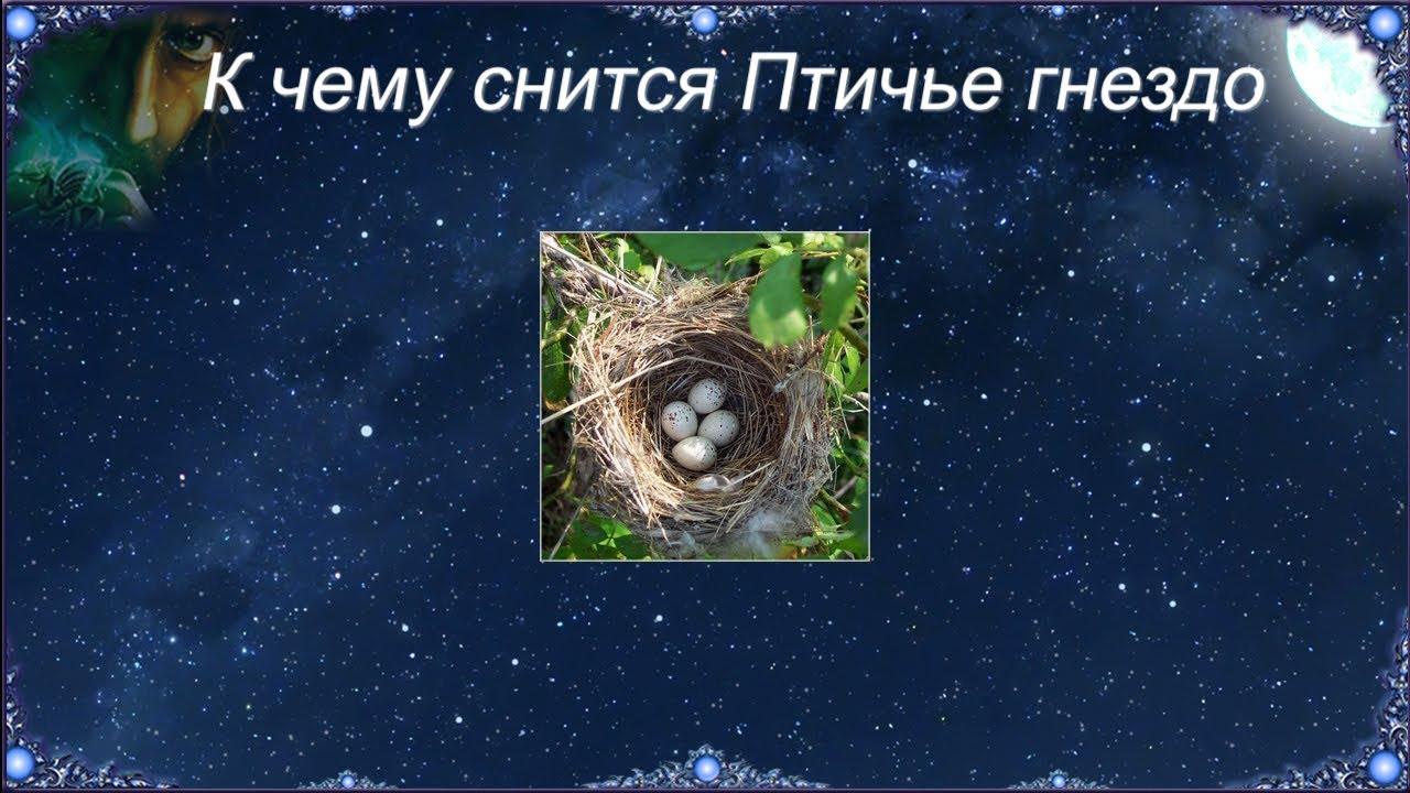 Сонник синица гнездо яйца. к чему снится синица гнездо яйца видеть во сне - сонник дома солнца