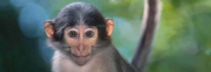 К чему снится обезьяна во сне — по 90 сонникам! если видишь во сне обезьяна что значит?
