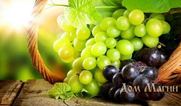 Сонник рассыпать виноград. к чему снится рассыпать виноград видеть во сне - сонник дома солнца