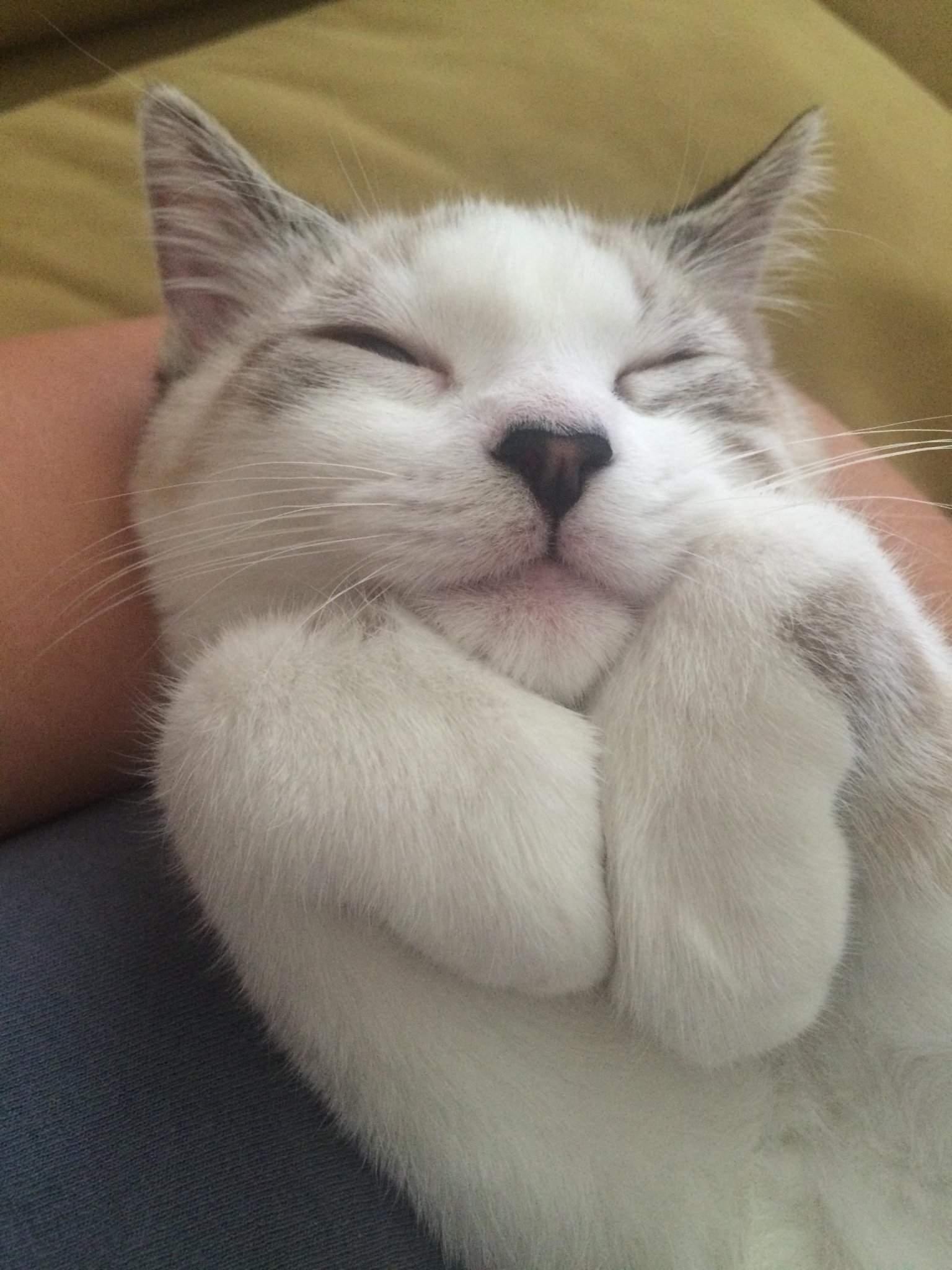 Сонник серый толстый кот. к чему снится серый толстый кот видеть во сне - сонник дома солнца
