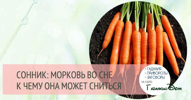 «сонник выкапывать морковь приснился, к чему снится во сне выкапывать морковь»