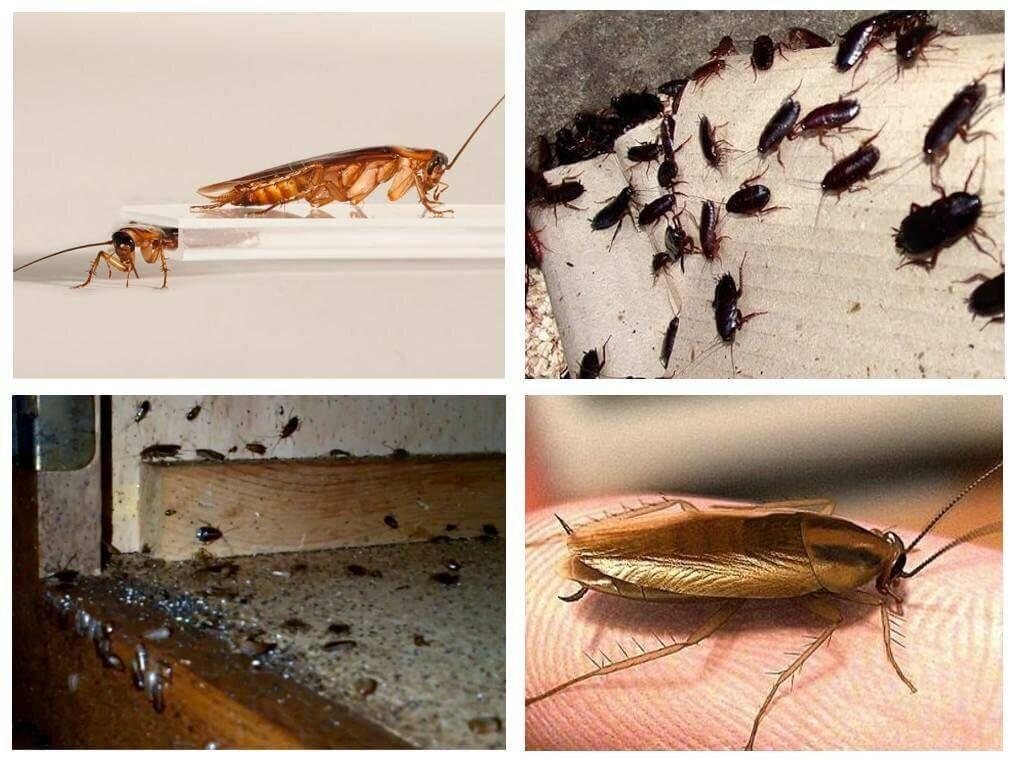 Кузнечик насекомые