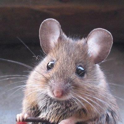Дохлая крыса и дохлые кошки