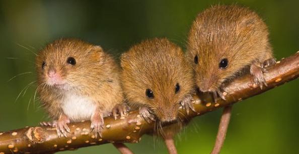 Сонник найти мышь. к чему снится найти мышь видеть во сне - сонник дома солнца
