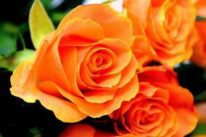 К чему снится роза