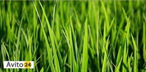 Косить зеленую траву косой