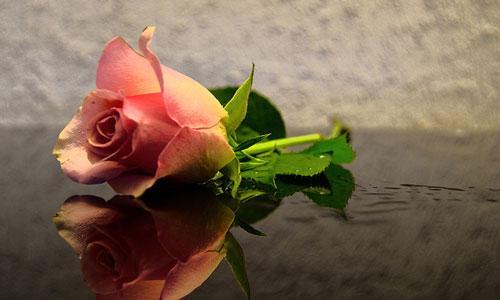 Сонник роза приснилась, к чему снится роза во сне видеть?
