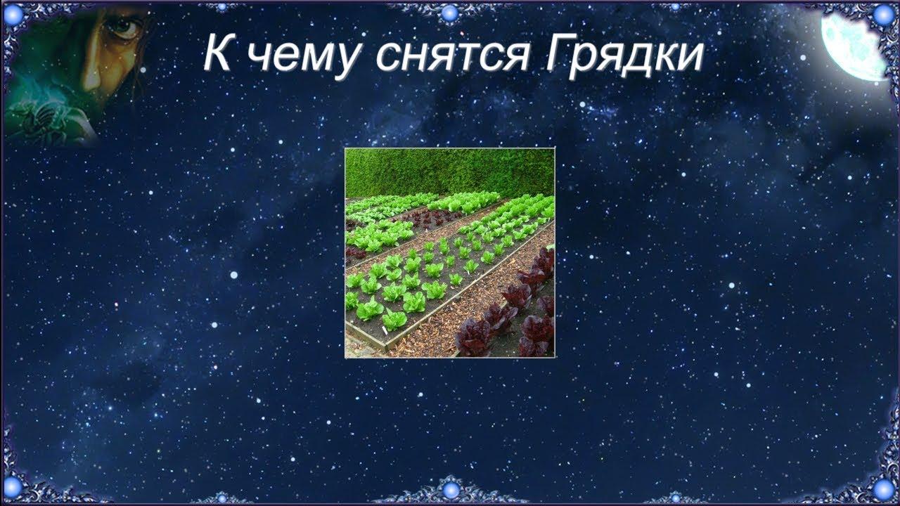 Сонник огород и грядки с зеленым луком. к чему снится огород и грядки с зеленым луком видеть во сне - сонник дома солнца