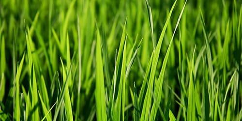 Сонник косят траву. к чему снится косят траву видеть во сне - сонник дома солнца