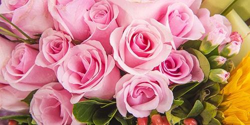 Сонник куст желтых роз. к чему снится куст желтых роз видеть во сне - сонник дома солнца