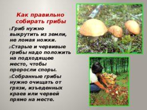 Нести в корзине грибы опята