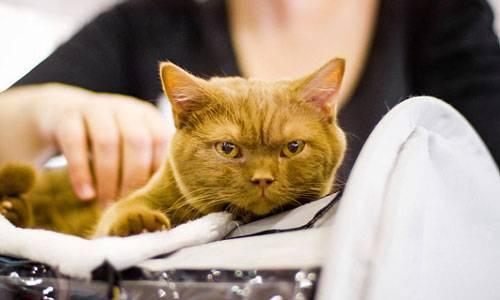 Сонник толстые кошки. к чему снится толстые кошки видеть во сне - сонник дома солнца