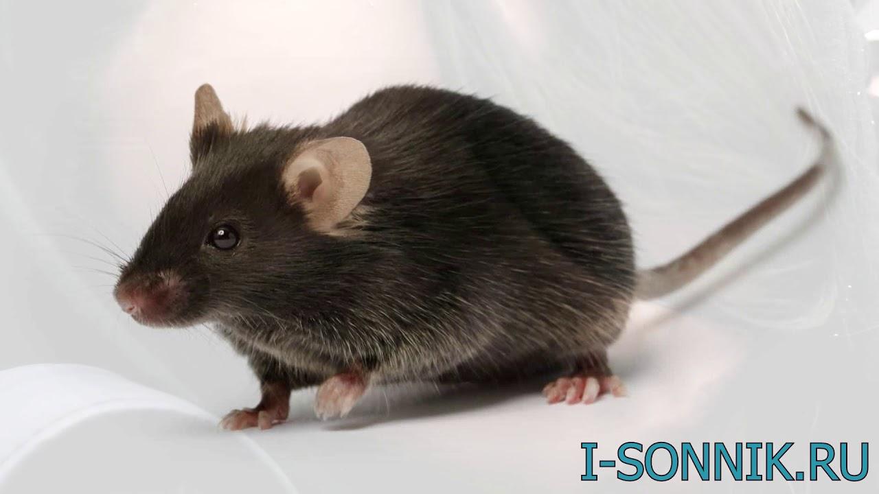 Белая и черная мышь