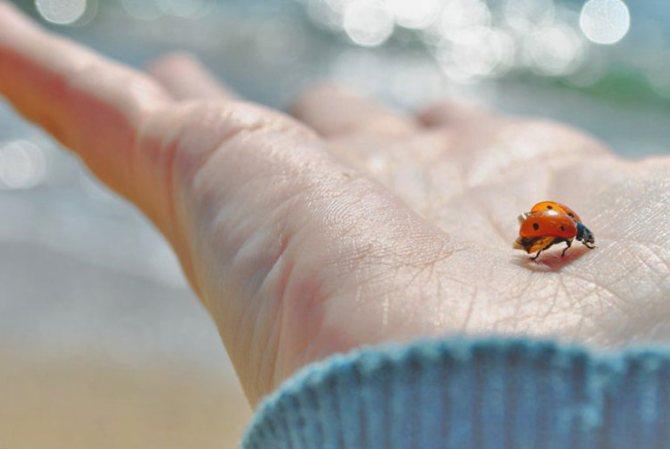 «сонник насекомое приснилось, к чему снится во сне насекомое»