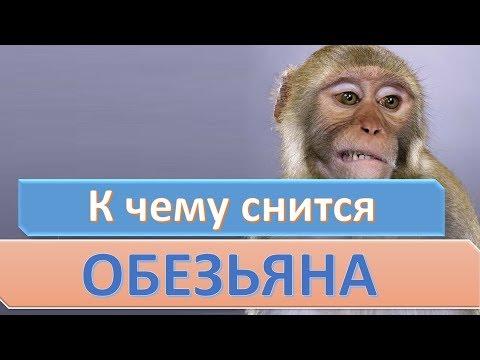 Сонник: если приснилась обезьяна