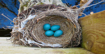 К чему снится гнездо во сне — по 90 сонникам! если видишь во сне гнездо что значит?