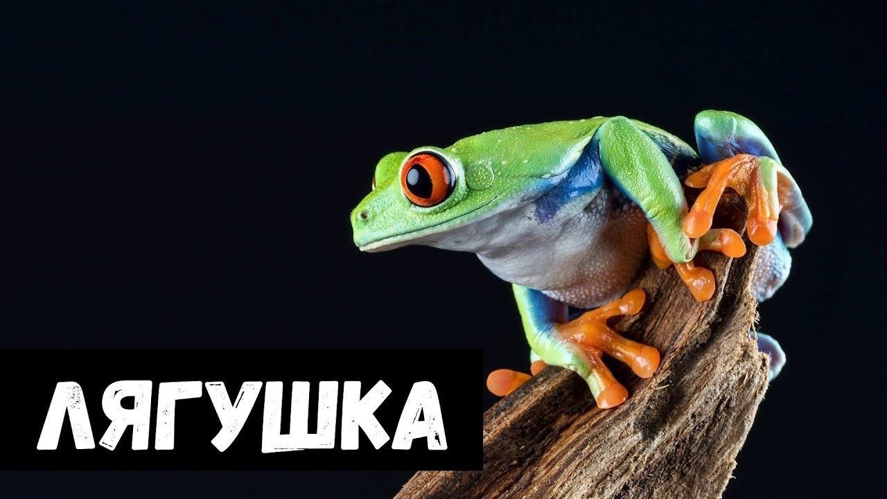 К чему снится жаба во сне — по 90 сонникам! если видишь во сне жаба что значит?