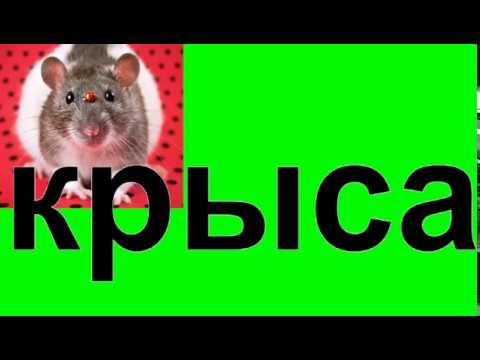 К чему снятся мертвые крысы. мертвая крыса толкование сонника