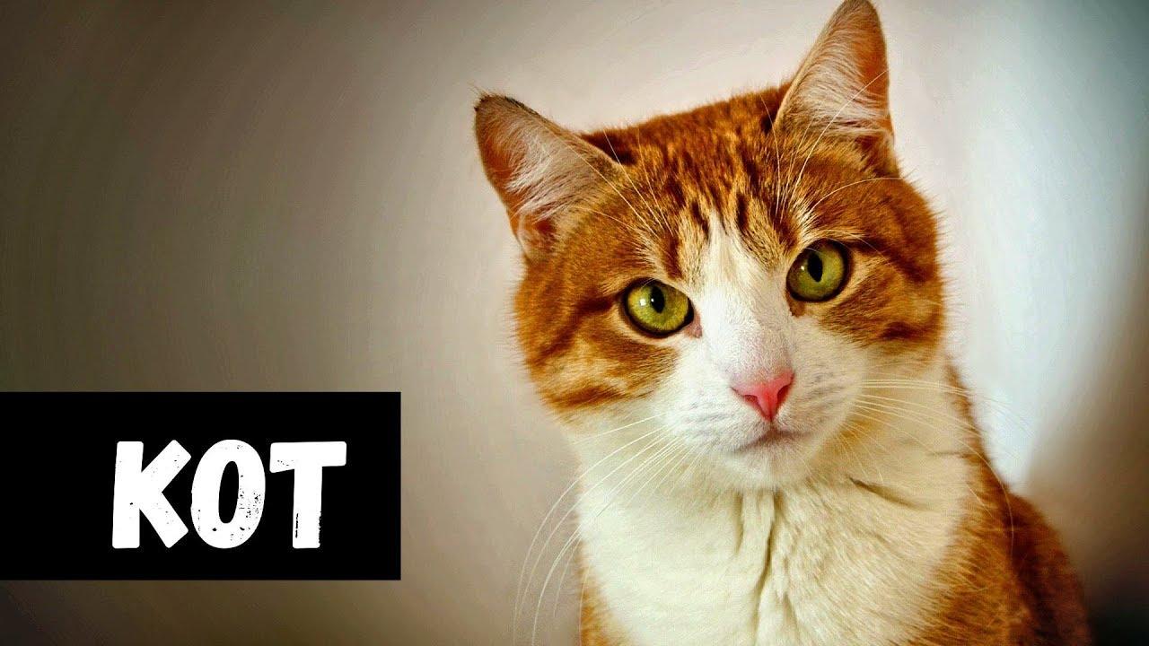 Сонник толстый кот. к чему снится толстый кот видеть во сне - сонник дома солнца
